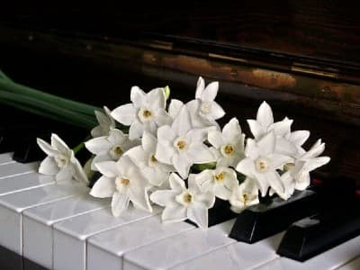 Piano keys with flowers. Learn to play all 12 major scales.